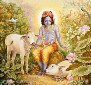 Krishna sits peacefully with His cows.