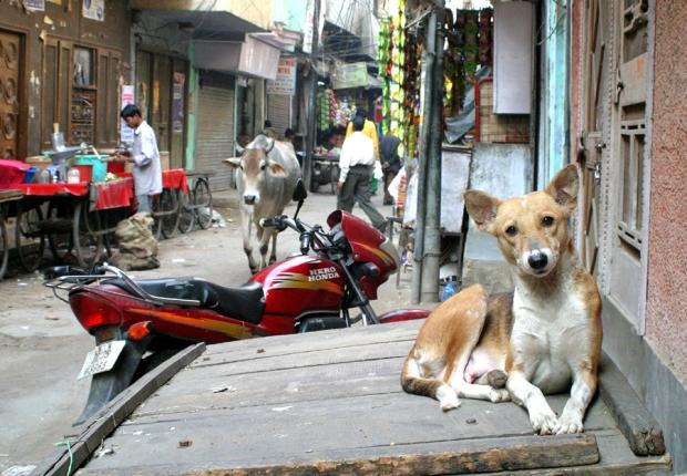 नहीं नहीं ये कुत्ता बचाव टीम में नहीं था। ये बेचारा तो सुस्ता रहा है ठेले पर।