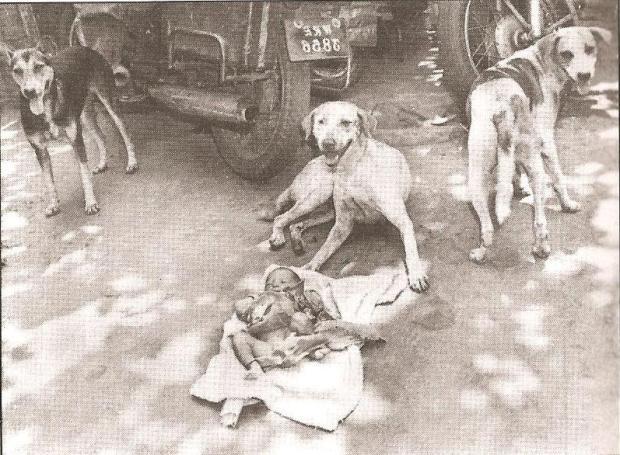 तीन आवारा कुत्ते जिन्होंने रात भर रखवाली कर त्यागे हुए नवजात शिशु की जान बचाई