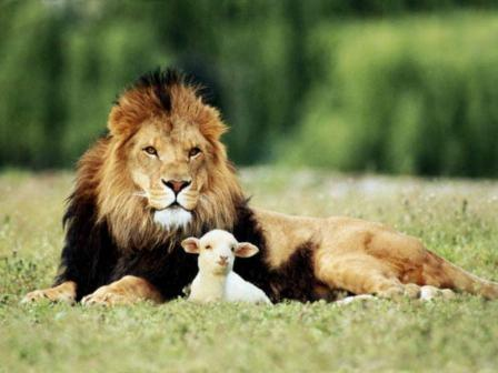 Lion or Lamb? Choice is yours!