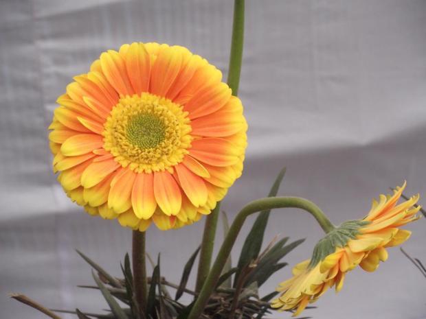 क्या प्रेम आज भी इतना ही मासूम है इस फूल की तरह?
