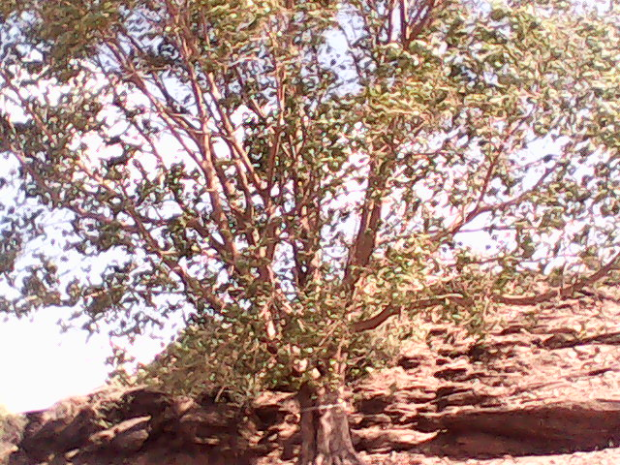 This Peepal Tree Was Quite Impressive!