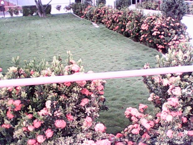 Lovely Roses Inside The Fort!