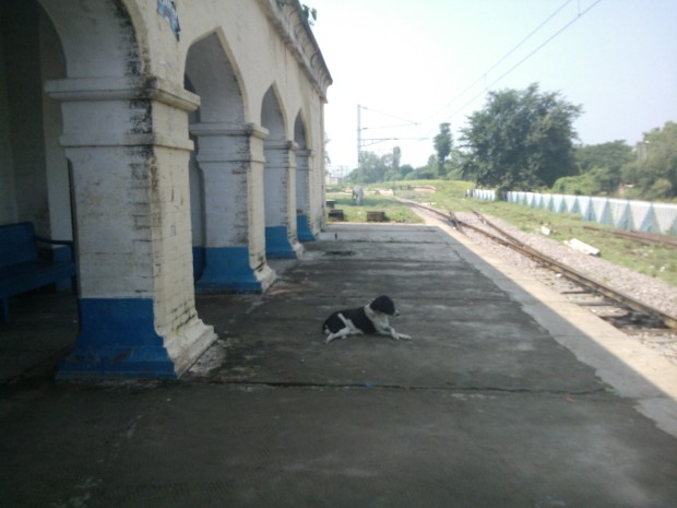 I wonder from which train has this doggie arrived :P