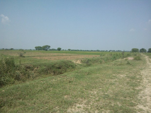 And that's the route I travelled to reach to my rice fields and home at Village Kanaura ...That's the route I always followed since childhood...