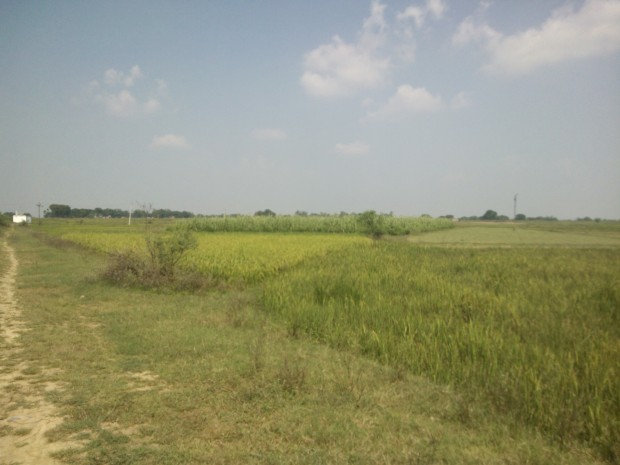 Greenery everywhere..A happy departure from dull city life :-)