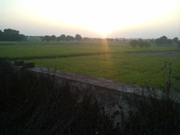 Finally, when I reached my new home near my fields at my Village I slept peacefully to wake up again after couple of hours to  notice setting sun over my fields enveloped with lush green rice crop!