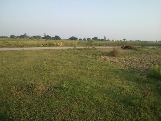 Regular scene outside my new home in village :-)