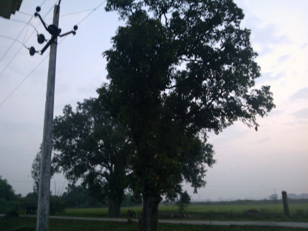 The huge people tree outside my home  during early morning..Its leaves makes lots of scary noise in the night time :P :P :P