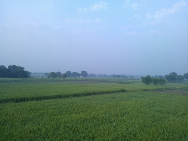 Morning view of my fields :-) It comforts not only the eyes but also my soul :p