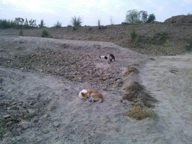 During my frequent visits to banks of Ganges I always came to notice these three doggies  :P :P :P