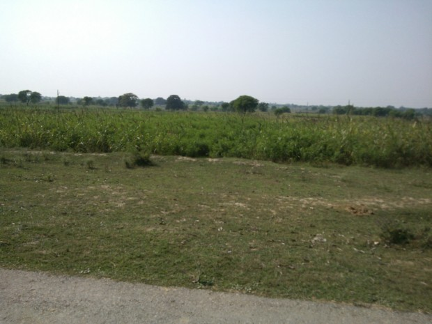 "Right now fields are lush green with rice crops...However, many farmers have ""Bajra"" and "" Jhunri"" crops in their fields!"