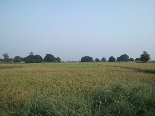 Going To Railway Station Amid These Lovely Fields :-)