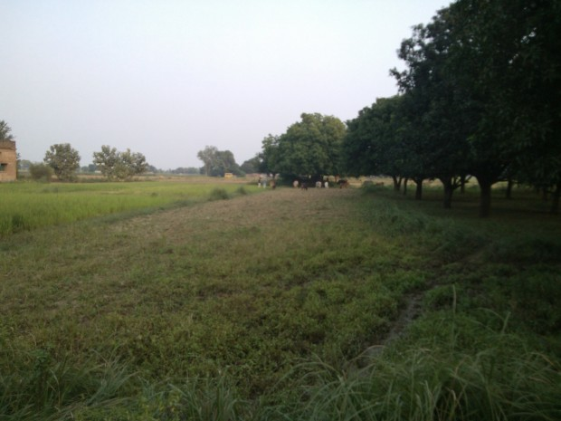 Left The Rice Fields Far Behind To Come Close To The Railway Station...