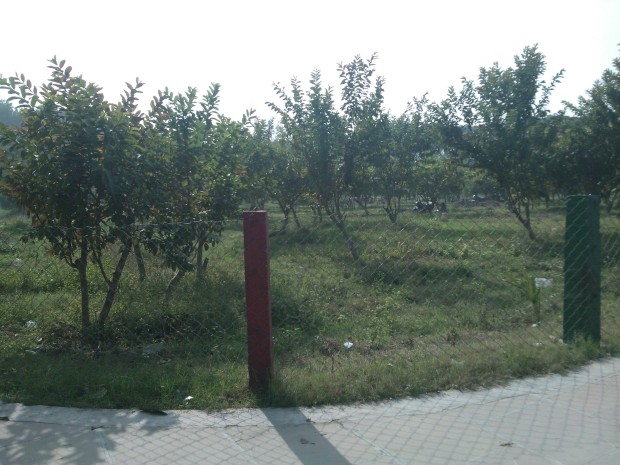 This place cultivates best varieties of Guava. This park is about to get the status of National Eco-Knowledge Park!