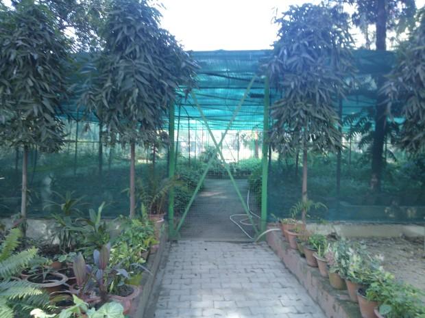 Green house plantation inside the Khusro Bagh!