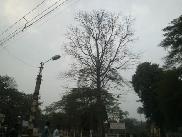 A Tree taken aback by pomp and show at Civil Lines :-(