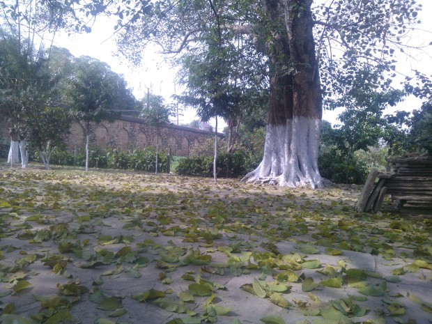 Very Beautiful Scene Inside Khusro Bagh...Leaves Everywhere...A Very Striking Image Both Philosophically And Aesthetically :-)