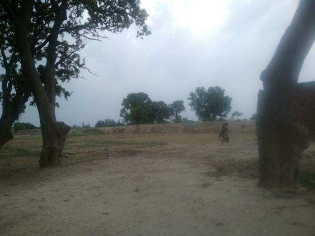 Village Children Aiming At Green Mangoes  :-)