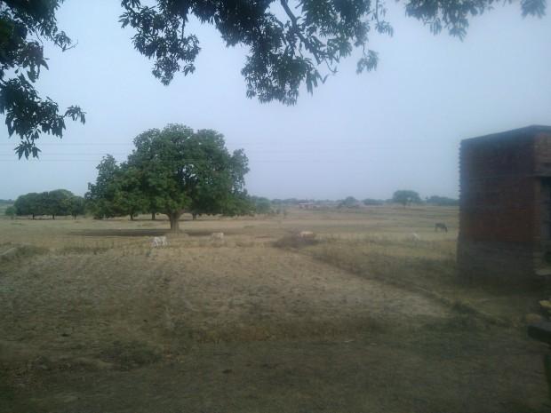 Rural Landscape...