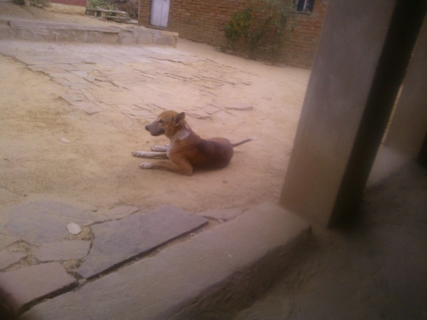 A Village Kukkur ...I mean A DOGGIE :P :P :P