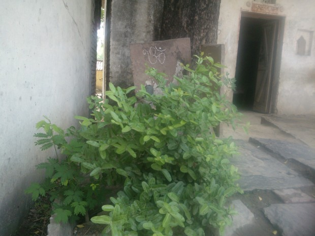 Small Shiva Temple At My Old Village Home!!