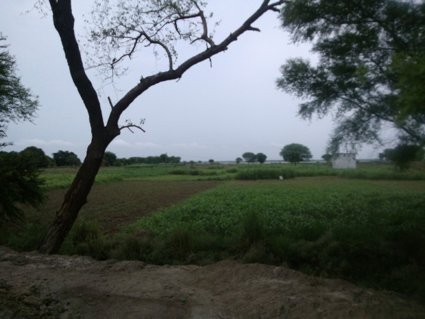 That's the landscape which appears if you happen to take road route to Chunar from Varanasi...