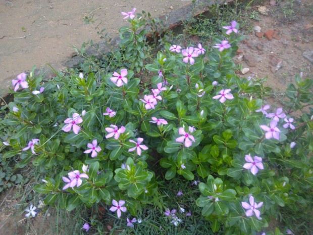 Rainy Or Winter season are the perfect period to witness the beauty of flowers..