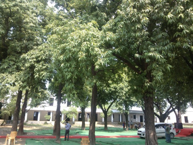 This Inter College Has Lots Of Trees Inside Its Premises :-) A Good Job On Part Of College Administration!!