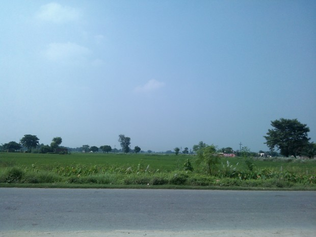 Greenery Prevailed On Road Leading To Bhathat From Gorakhpur!